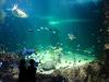 giant-fish-aquarium